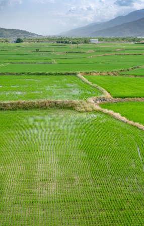 It is a landscape of beautiful green terraced field. photo