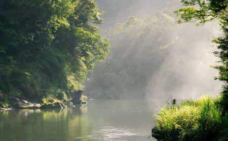 forest river: It is a beautiful landscape of peaceful forest with sunlight.