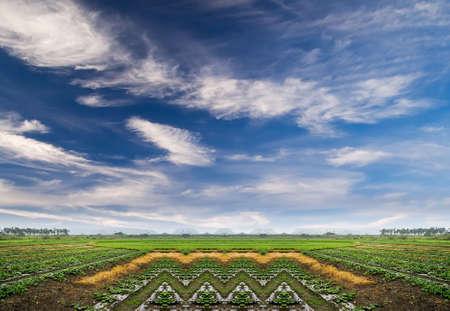 Landscape of green farm under the blue sky. photo