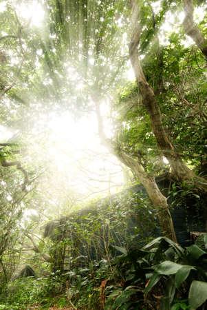 destroyed: Alte Haus mit Sonne Licht durch die Struktur in tropischen Wald. Lizenzfreie Bilder