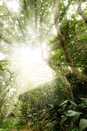 Old house with sun light through the tree in tropical forest. Stock Photo - 6519597