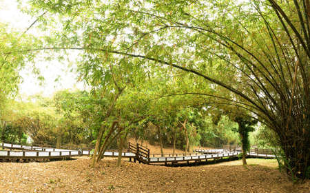 Panoramic bamboo garden of Chinese style in outdoor. photo