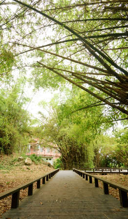 Panoramic bamboo forest scenic in Chinese garden. photo
