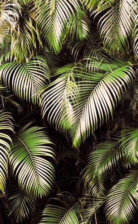 Jungle background of tropic rain forest tree and leaf. photo