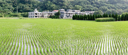 Rural scenery of panorama with green farm, trees and small town in Taiwan, Asia. photo