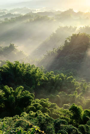 quiet scenery: Sunlight with mist in forest, nature scenery with peace in Taiwan.