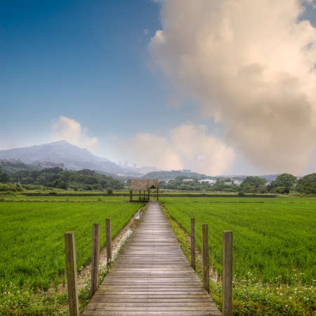 Attractive rural scenery with green farm and yellow wooden path and house under blue sky. photo