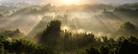 panoramic: Forest morning with golden sunlight in countryside in Taiwan, Asia.