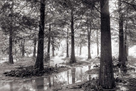 Landscape of forest with brook in black and white. photo