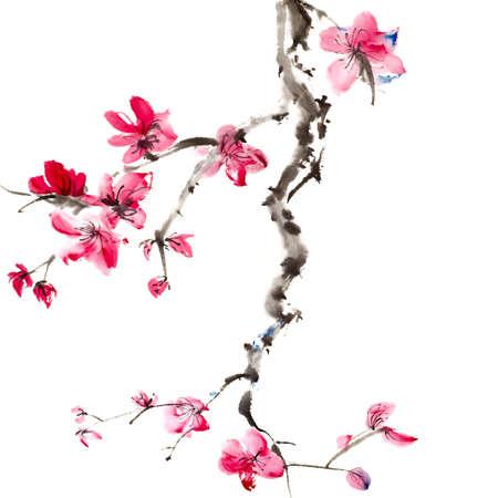 ciruela: Pintura China de flor de flores, ciruela, sobre fondo blanco.