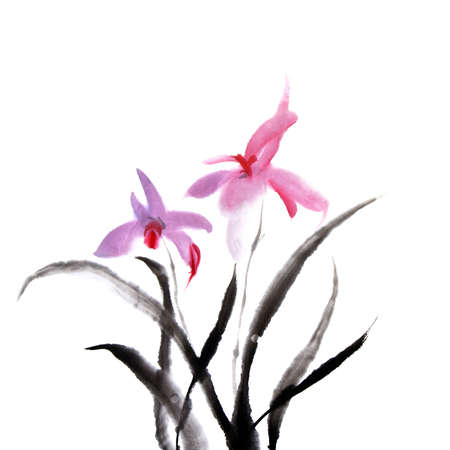 brush painting: Chinese painting of orchid flower on white background.