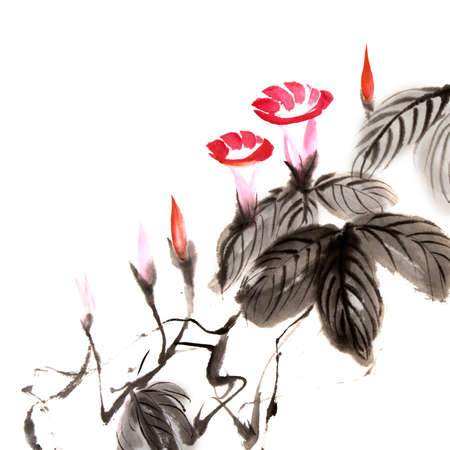 Chinese flower painting of morning glory on white background. Imagens