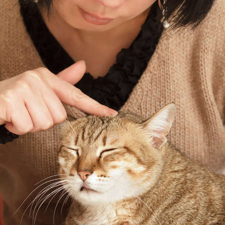 dwell: Comfortable expression on cute cat when being touched.