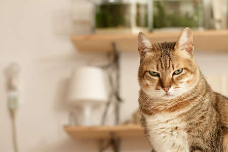 dwell: Angry cat with unhappy expression standing on desk in home.