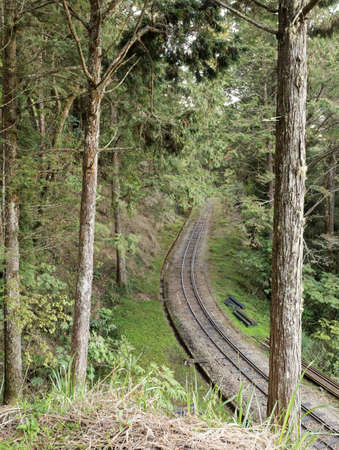 forest railroad: Forest railroad with trees and railway in Alishan National Scenic Area, Taiwan, Asia.