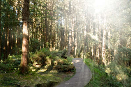 taiwan scenery: Path in forest with sunlight from trees in Alishan National Scenic Area, Taiwan, Asia. Stock Photo