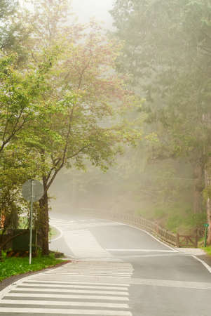 Mist on road in forest in daytime with nobody. photo
