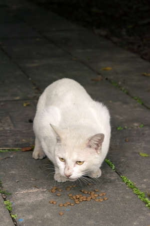 Undomesticated cat cat in urban city.  photo