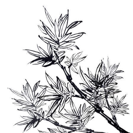 Chinese traditional ink painting, bamboo on white background. photo