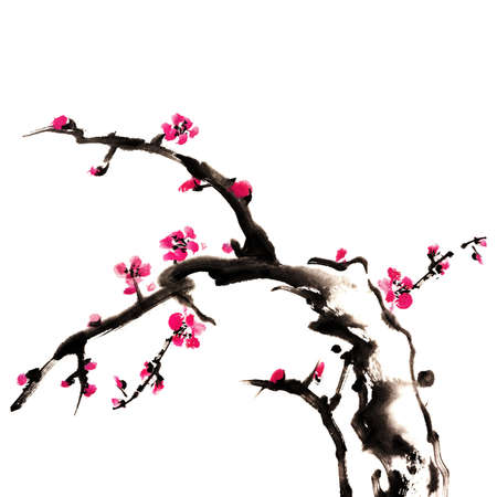 japan calligraphy: Chinese painting of flowers, plum blossom, on white background Stock Photo