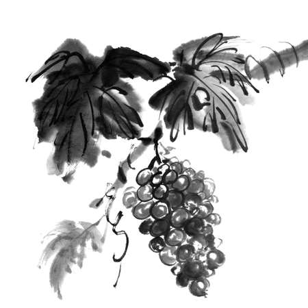 ink painting: Chinese traditional ink painting, grapes on white background.