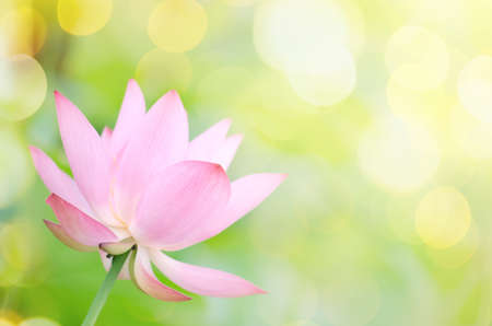 spiritual background: Lotus flower with beautiful sunlight and flare and bokeh.