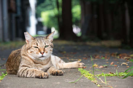 Stray tabby cat lay on ground in the street  photo