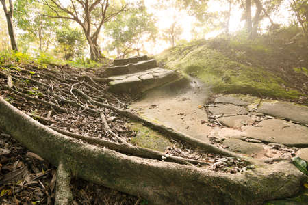 Forest pathway with stoned aged stairs. photo