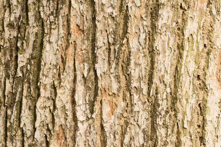 elm: Bark of Elm.