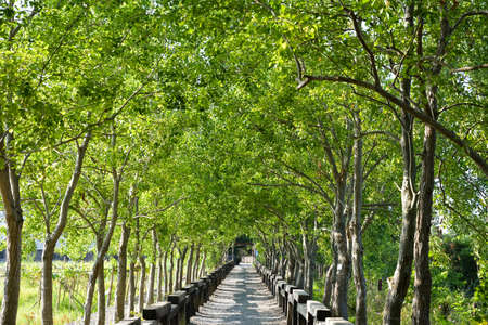 Tree lined rural lane, shot at Luodong Forestry Culture Garden, Yilan county, Taiwan. Imagens - 22442620