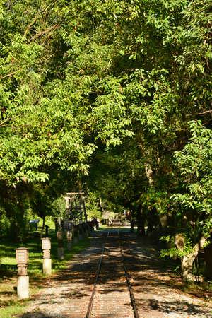 scrub grass: Railway line passing through the quiet forest Stock Photo