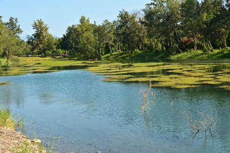 pipa: Pipa lake at Taitung Forest Park, Taiwan, Asia