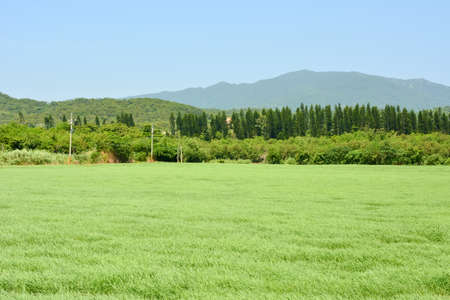 agriculturalist: Landscape with green grassland or meadow.