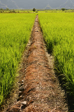 new way: Rice farm in the country, Hualien, Taiwan, Asia Stock Photo