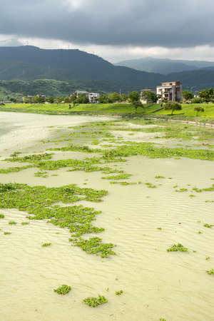 contaminated: Contaminated overgrown river in Taiwan, Asia. Stock Photo