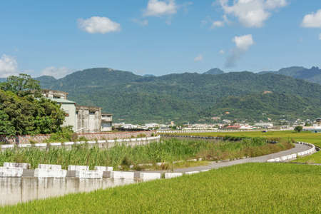 agriculturalist: Rural scenery of Hualien with paddy farm and mountain faraway in Hualien, Taiwan, Asia.