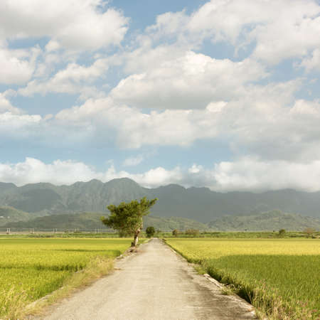 Road and paddy rice farm in with nobody, Hualien, Taiwan, Asia. photo