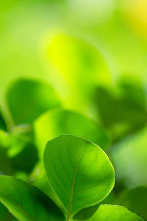 Green leaves with copyspace of beautiful bokeh background. photo