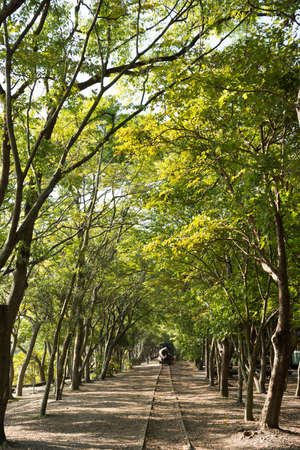 wood railroad: Forest with railroad, shot at Luodong Forestry Culture Garden, Yilan, Taiwan, Asia.