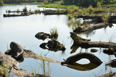 brushwood: Log pond, shot at Luodong Forestry Culture Garden, Yilan county Stock Photo