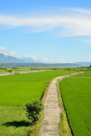 Rice farm in the country, Hualien, Taiwan, Asia photo