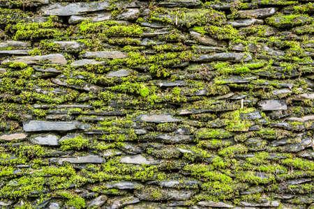 녹색 이끼 배경으로 돌 벽입니다.