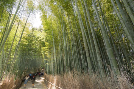 heave: KYOTO - April 26   Famous Arashiyama bamboo forest path with tourists on April 26, 2014 in Kyoto, Japan  Arashiyama is a area of forest and mountain that Japanese take their summer vacation here