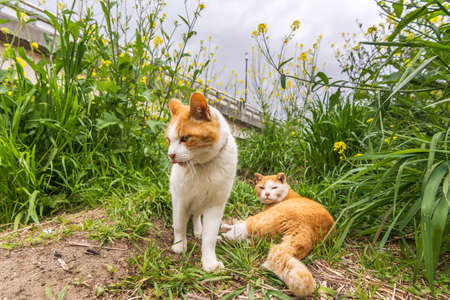 Two cats in the grass in Kyoto, Japan. photo