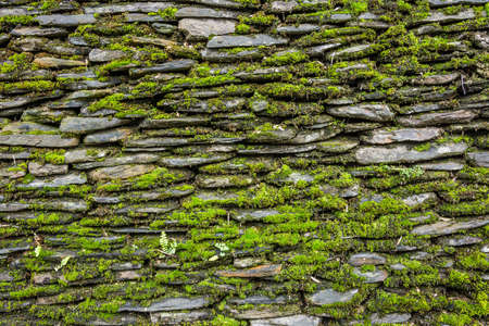 Stone wall with green moss background. photo