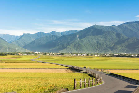 Rural scenery of paddy farm and country road in Chishang Township, Taitung County, Taiwan, Asia.