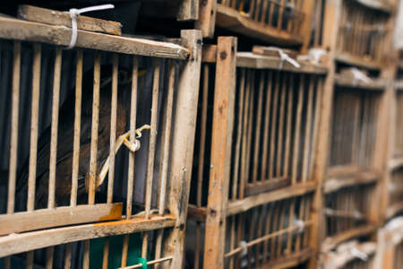 Birds in the cage, shot at bird street in Hong Kong, Asia. Stock Photo - 30318982