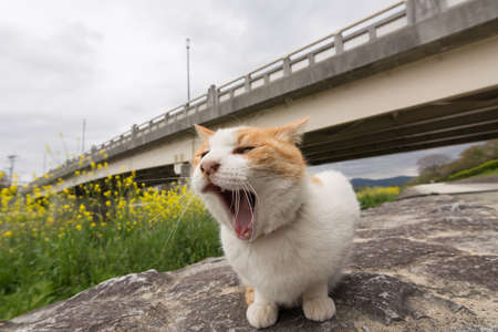 Ginger cat sit near the river in Kyoto, Japan. photo