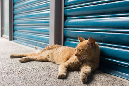 rely: Tabby ginger cat rely in front of the blue iron gate to rest in the cat village of Houtong, Taiwan.