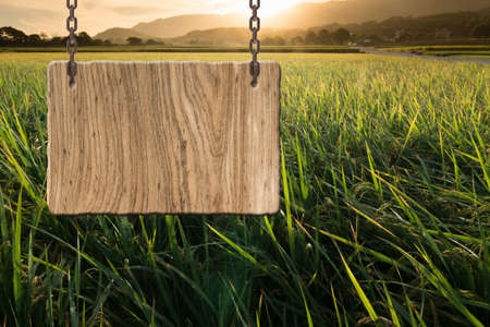 Blank wooden sign on field of farm. Concept of rural, idyllic, tranquility etc. Stock fotó